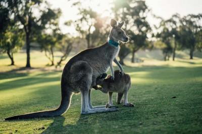 Avstralijo