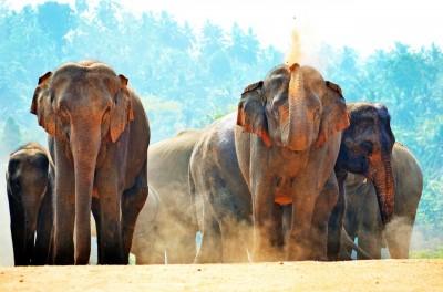 Prvi maj na Šrilanki