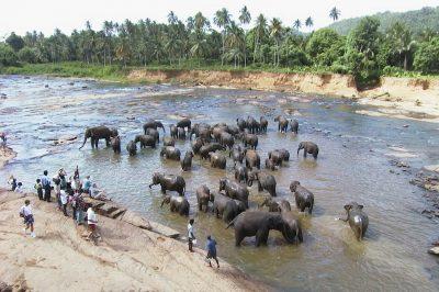 Colombo - Sri Lanka - Iz Ljubljane - akcija 485 EUR - prikazna slika