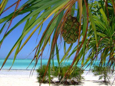 Zanzibar - Iz Milana - prikazna slika za objavo
